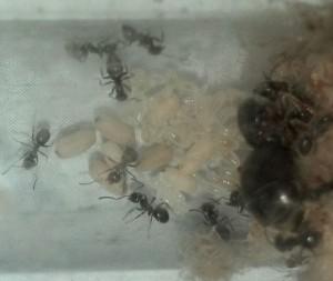 détruire fourmis jardin